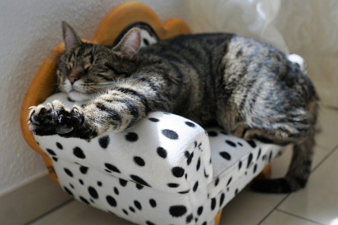 aspira peli gatto