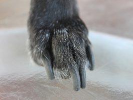 come tagliare le unghie al cane
