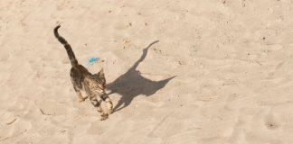 lettiera-per-gatti