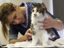 spazzola per gatti