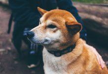 Collari per cani informazioni utili e tipologie