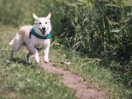 Come addestrare un cane