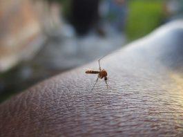 Come allontanare roditori mosche e zanzare dalle abitazioni in maniera efficace e salutare