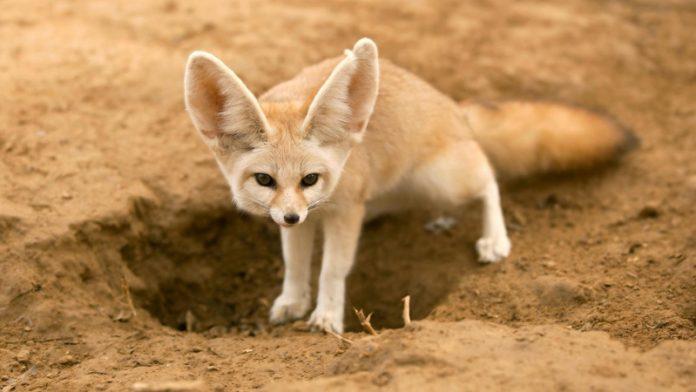 animali deserto - esterno