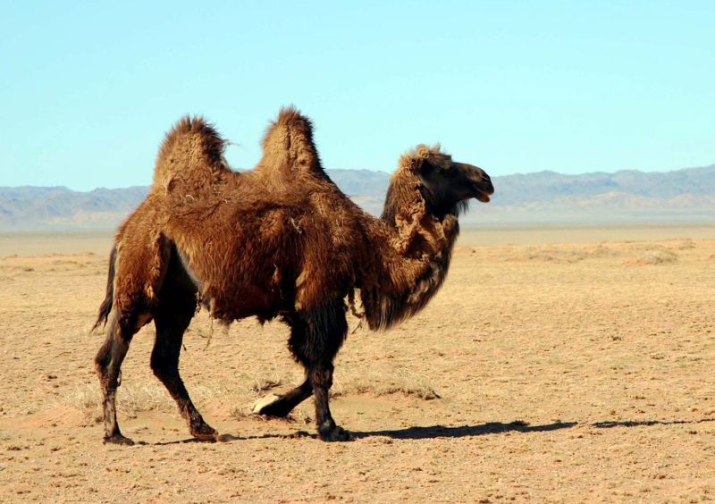 animali deserto - interno