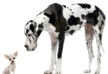cani da appartamento - esterno