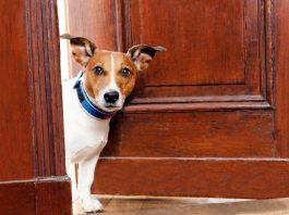 cani da appartamento - interno