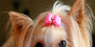 nome cane femmina - esterno