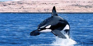 orca - esterno