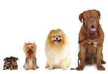 razze di cani - esterno