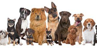 razze di cani - interno