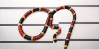 serpente corallo - esterno
